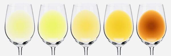 白ワインの色調